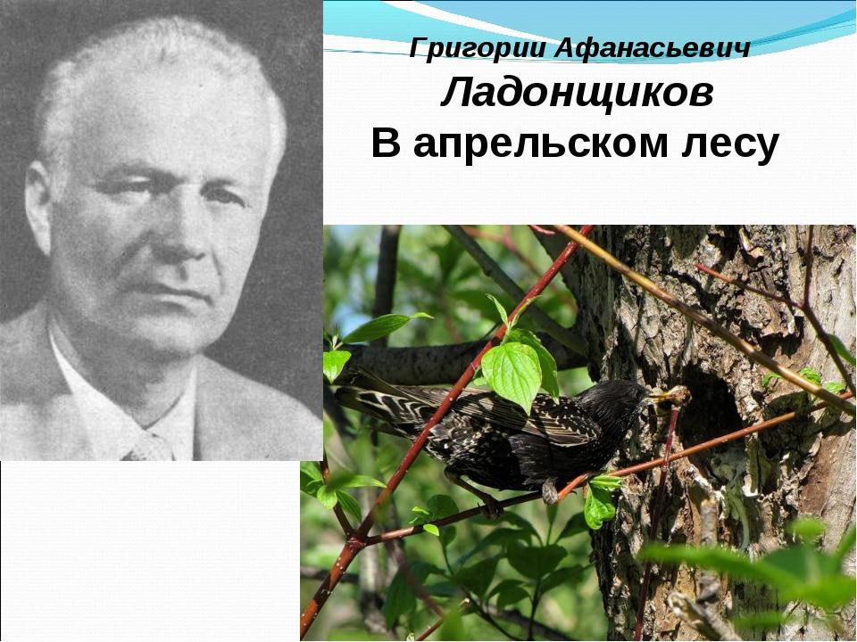 Григории Афанасьевич Ладонщиков В апрельском лесу