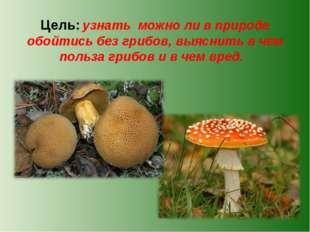 Цель: узнать можно ли в природе обойтись без грибов, выяснить в чем польза гр