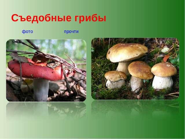 Съедобные грибы прочти фото