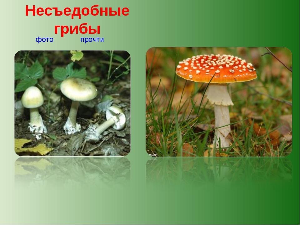 Несъедобные грибы прочти фото