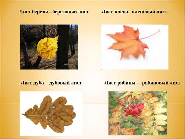 Лист берёзы – Лист клёна – берёзовый лист кленовый лист Лист дуба - Лист лип...