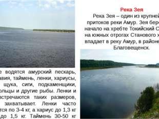 Река Зея Река Зея – один из крупнейших притоков реки Амур. Зея берет свое нач