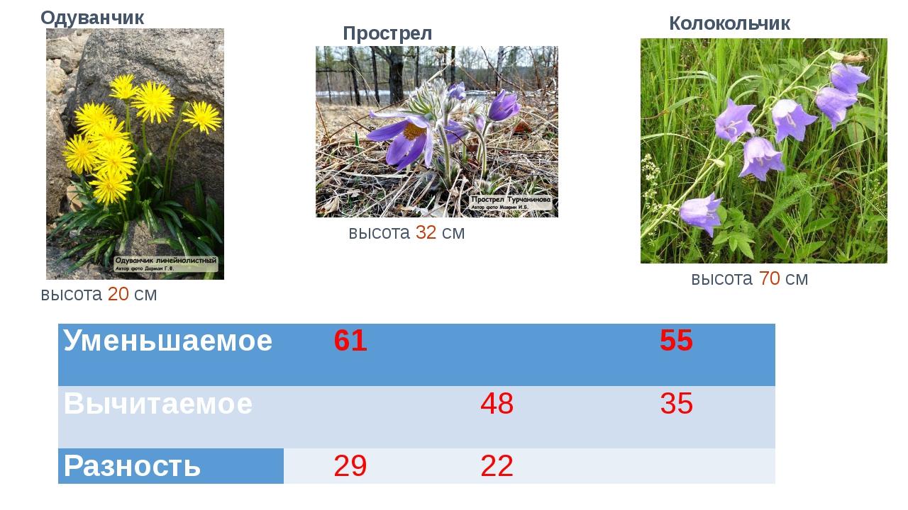 высота 70 см высота 32 см высота 20 см Одуванчик Прострел Колокольчик Уменьша...