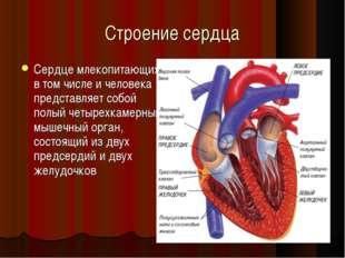 Строение сердца Сердце млекопитающих, в том числе и человека представляет соб