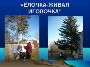 "«ЁЛОЧКА-ЖИВАЯ ИГОЛОЧКА"""