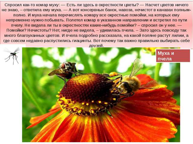 Спросил как-то комар муху: — Есть ли здесь в окрестности цветы? — Насчет цвет...