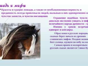 Красота и грация лошади, а также ее необыкновенная верность и преданность все