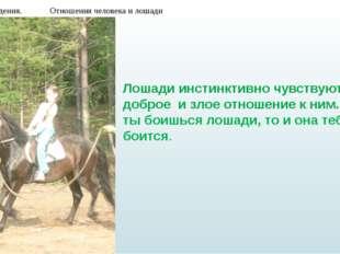 Мои наблюдения. Отношения человека и лошади Лошади инстинктивно чувствуют доб