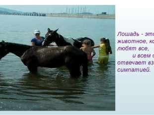 Лошадь - это то - животное, которое любят все, и всем она отвечает взаимной