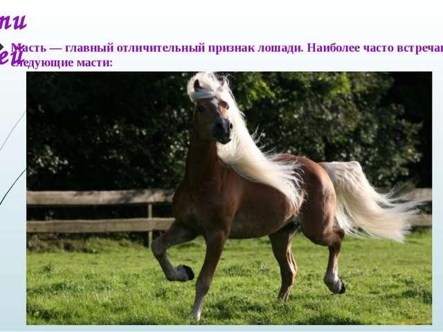 Масти лошадей Масть — главный отличительный признак лошади. Наиболее часто вс...