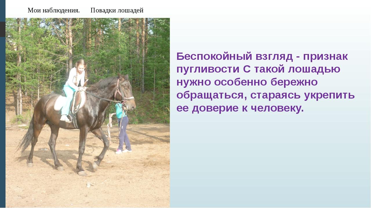 Мои наблюдения. Повадки лошадей Беспокойный взгляд - признак пугливости С так...