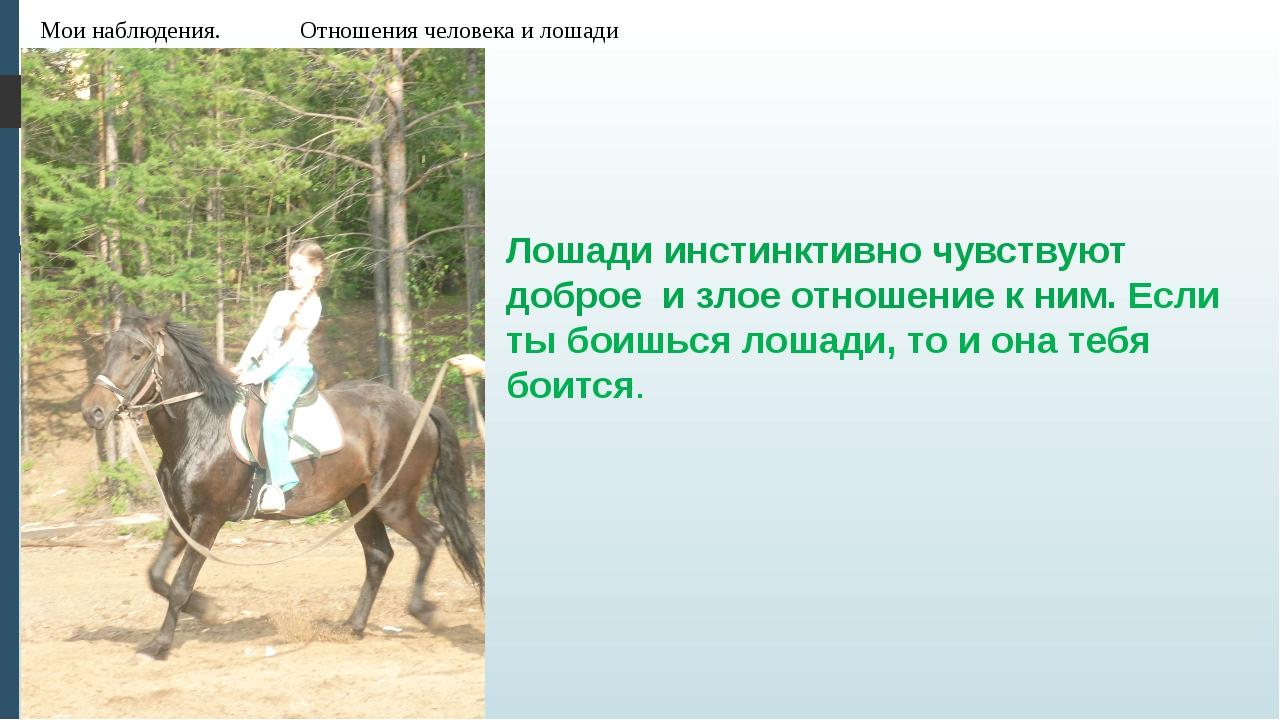 Мои наблюдения. Отношения человека и лошади Лошади инстинктивно чувствуют доб...