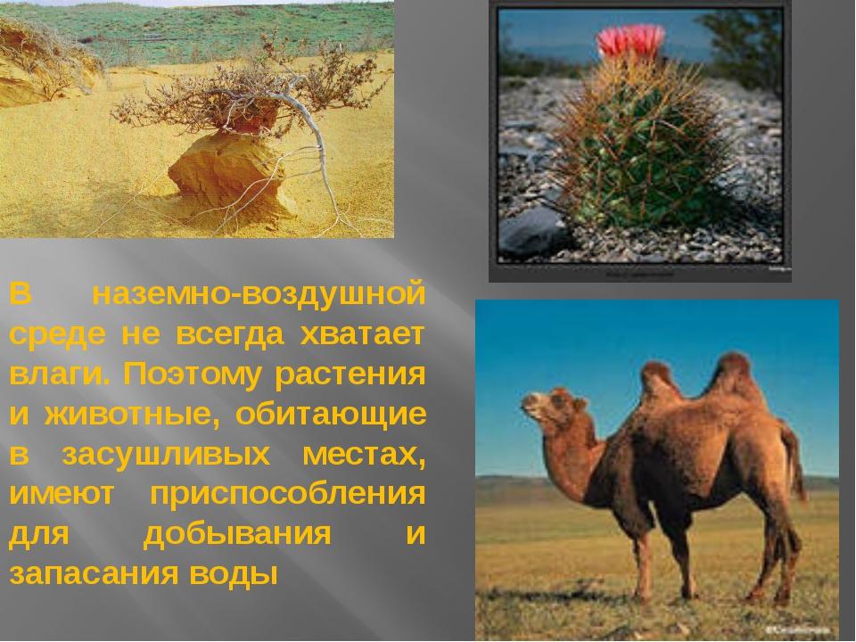 В наземно-воздушной среде не всегда хватает влаги. Поэтому растения и животны...