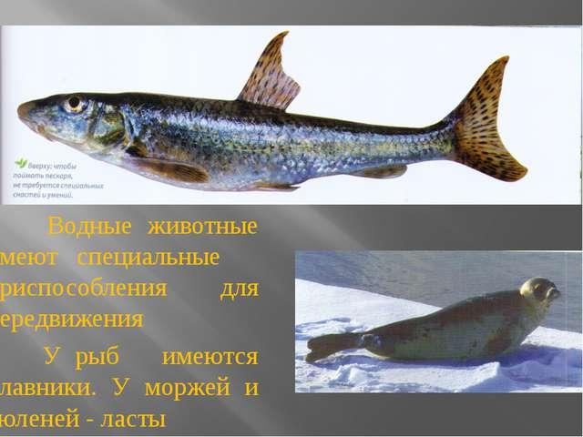 Водные животные имеют специальные приспособления для передвижения У рыб имею...
