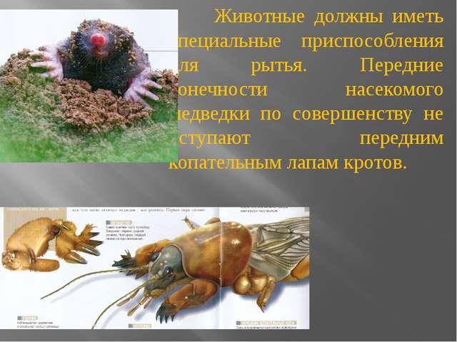 Животные должны иметь специальные приспособления для рытья. Передние конечно...