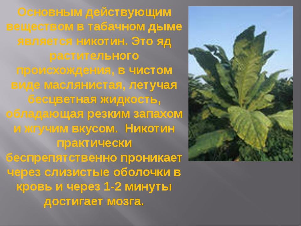 Основным действующим веществом в табачном дыме является никотин. Это яд расти...