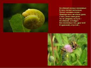 Не обижай лесных насекомых В лесу летают мотыльки, Ползут козявки и жуки… При