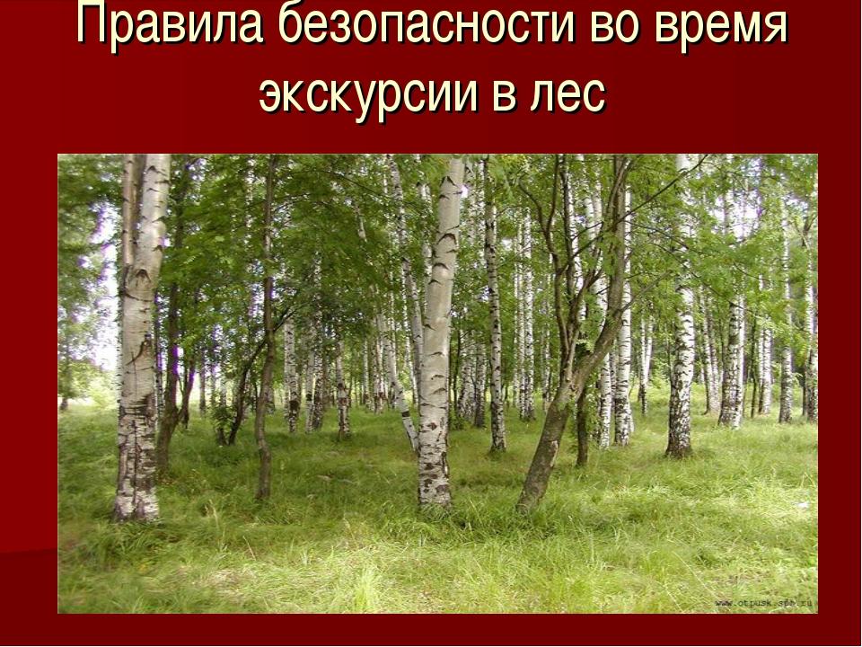 Правила безопасности во время экскурсии в лес