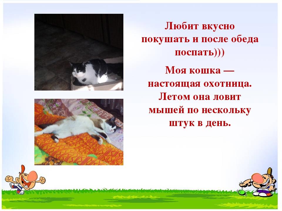 Любит вкусно покушать и после обеда поспать))) Моя кошка — настоящая охотниц...