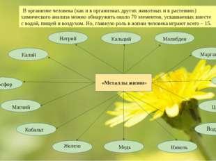 В организме человека (как и в организмах других животных и в растениях) хими