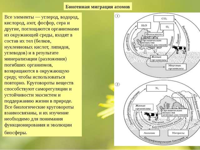 Биогенная миграция атомов Все элементы — углерод, водород, кислород, азот, фо...