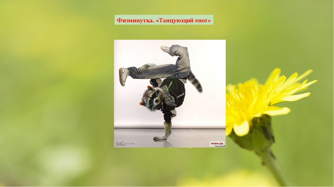 Физминутка. «Танцующий енот»