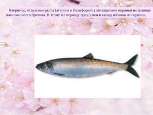 Например, отдельные рыбы (атерина в Калифорнии) откладывают икринки на грани
