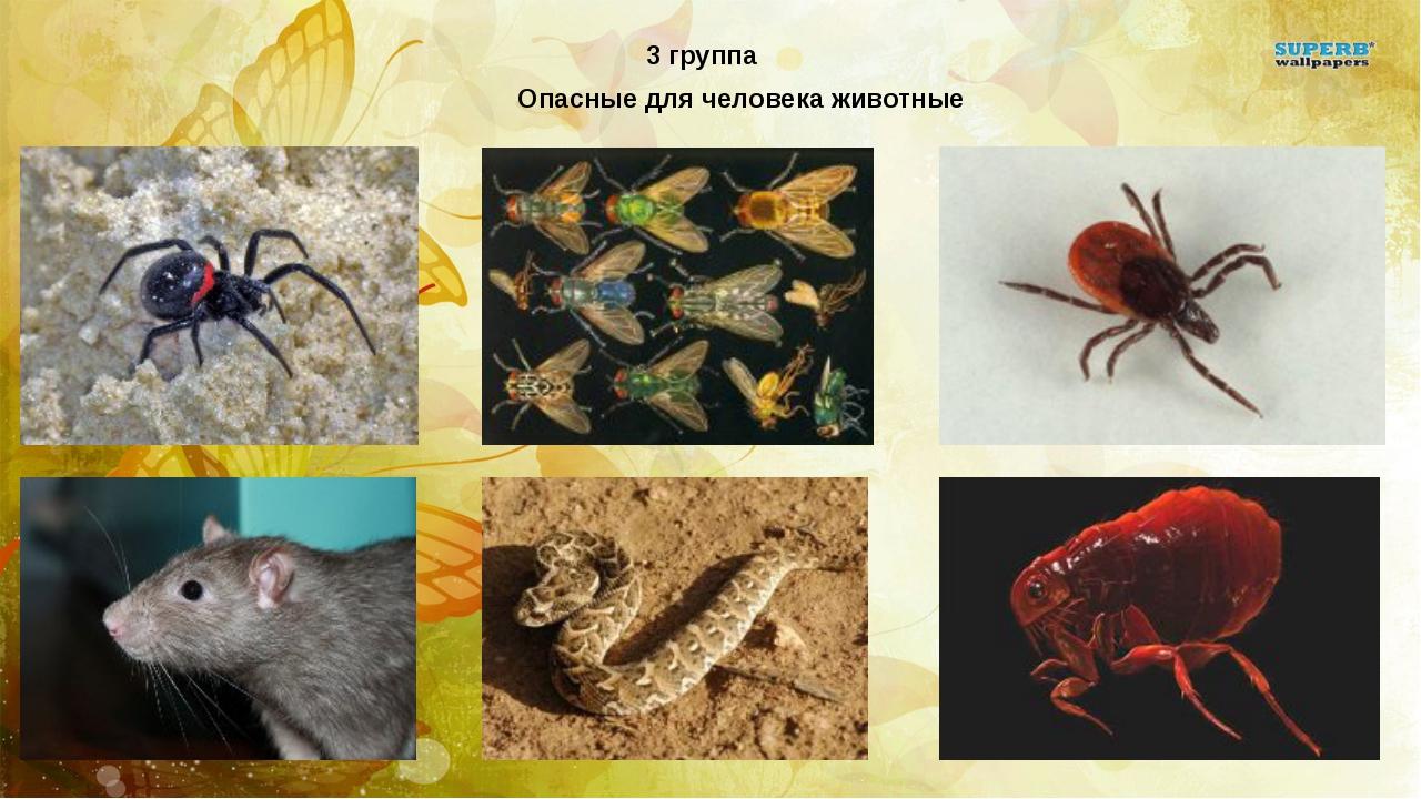 Опасные для человека животные 3 группа