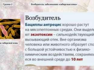 Возбудитель заболевания «сибирская язва» Бацилла сибирской язвы Группа 2