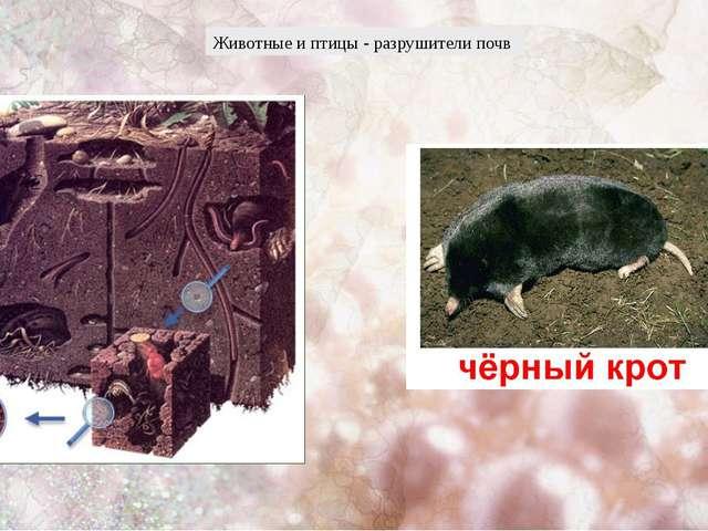 Животные и птицы - разрушители почв