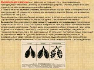Дыхательная система состоит из тех же отделов, что и у пресмыкающихся : прово