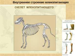 Внутреннее строение млекопитающих
