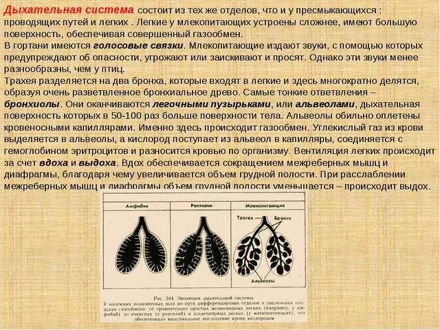 Дыхательная система состоит из тех же отделов, что и у пресмыкающихся : прово...