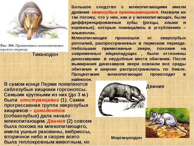 Большое сходство с млекопитающими имели древние зверозубые пресмыкающиеся. На...