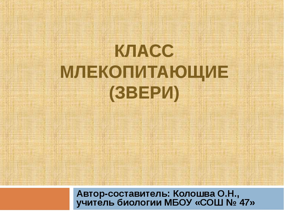КЛАСС МЛЕКОПИТАЮЩИЕ (ЗВЕРИ) Автор-составитель: Колошва О.Н., учитель биологии...
