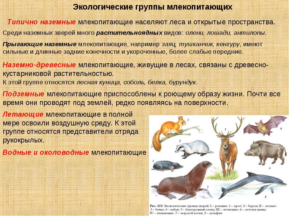 Экологические группы млекопитающих Типично наземные млекопитающие населяют ле...