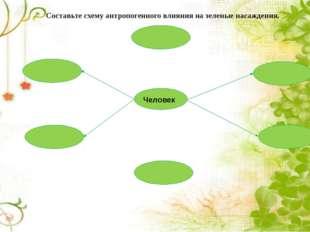 Составьте схему антропогенного влияния на зеленые насаждения. Человек