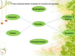Схема антропогенного влияния на зеленые насаждения. Человек Охраняет Выращива