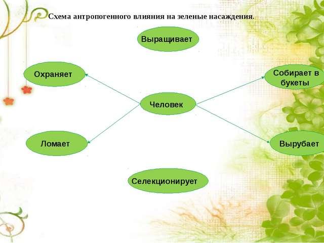 Схема антропогенного влияния на зеленые насаждения. Человек Охраняет Выращива...
