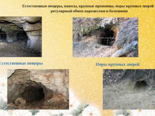 Естественные пещеры, навесы, крупные промоины, норы крупных зверей - регулярн