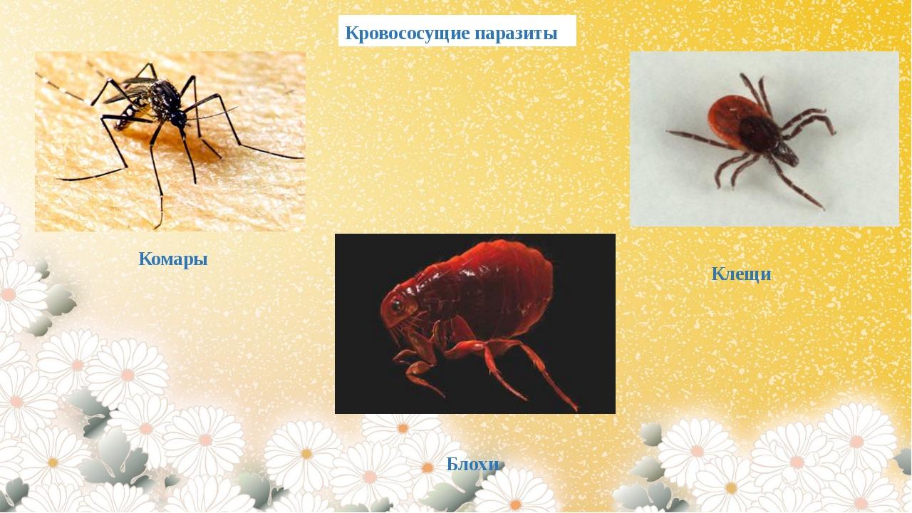 Кровососущие паразиты Комары Блохи Клещи