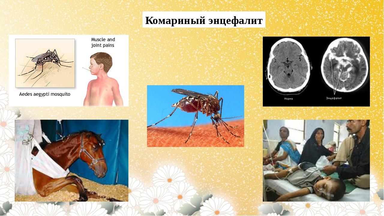 Комариный энцефалит