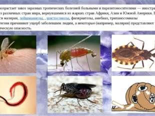 Непрерывно возрастает завоз заразных тропических болезней больными и паразито