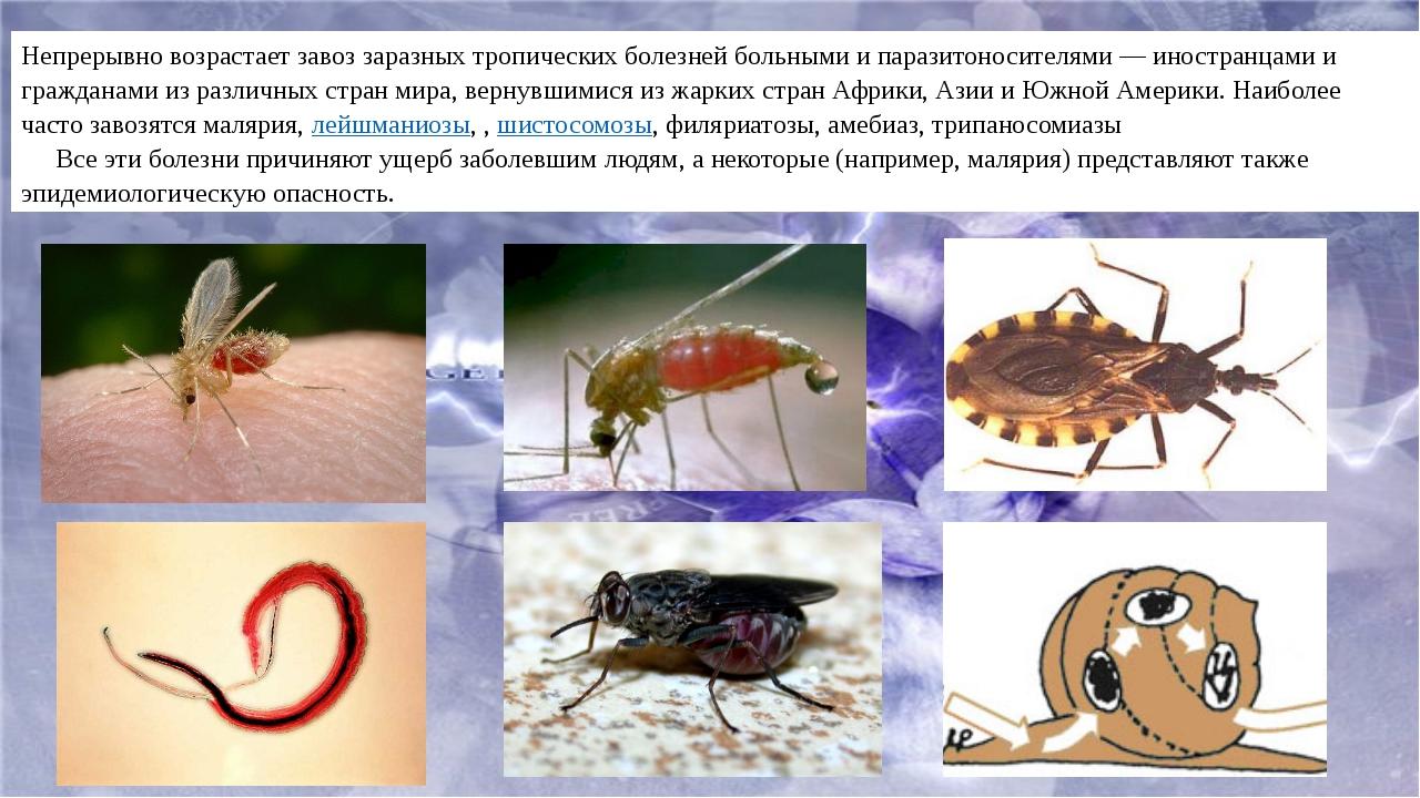 Непрерывно возрастает завоз заразных тропических болезней больными и паразито...
