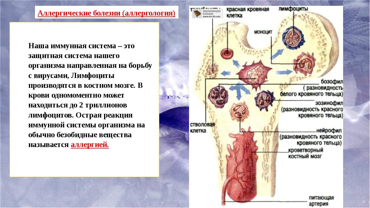 Наша иммунная система – это защитная система нашего организма направленная н...