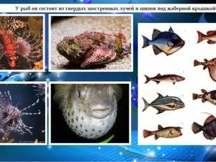 У рыб он состоит из твердых заостренных лучей и шипов под жаберной крышкой