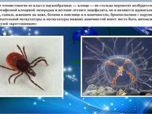 Маленькие членистоногие из класса паукообразных — клещи — не столько перенос