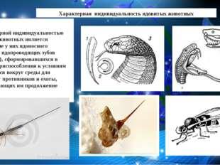 Характерная индивидуальность ядовитых животных Характерной индивидуальностью