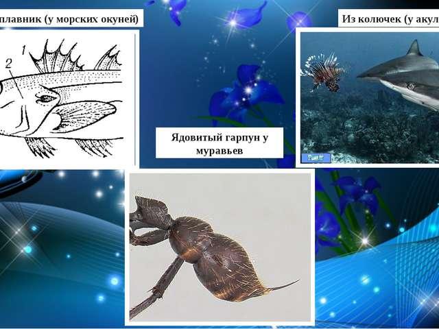 Спинной плавник (у морских окуней) Из колючек (у акулы) Ядовитый гарпун у мур...