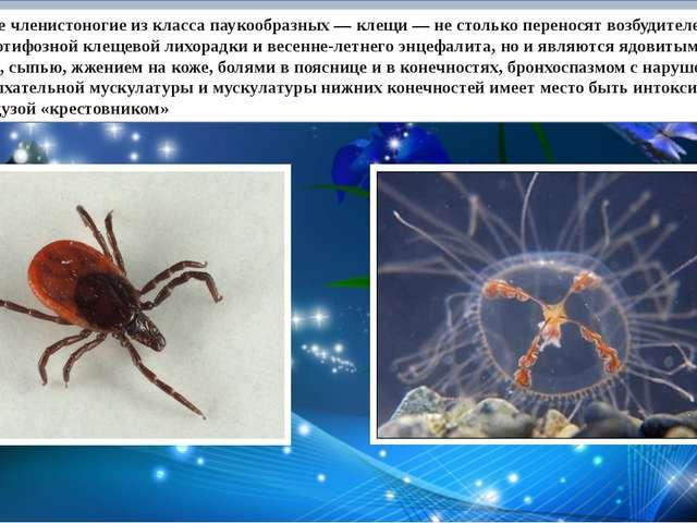 Маленькие членистоногие из класса паукообразных — клещи — не столько перенос...